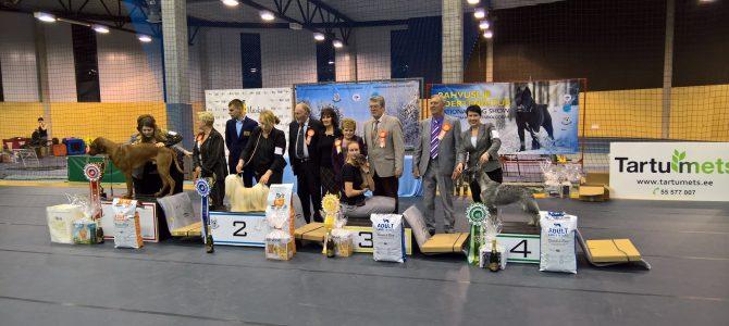 New Estonian Champion and BIS 4 in Valga –Bonzen Cecilia